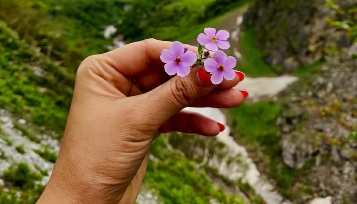 Valley of flowers himalayan gypsy