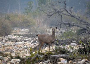 Jim Corbett National Park-A Perfect Destination for Green Panthers 1