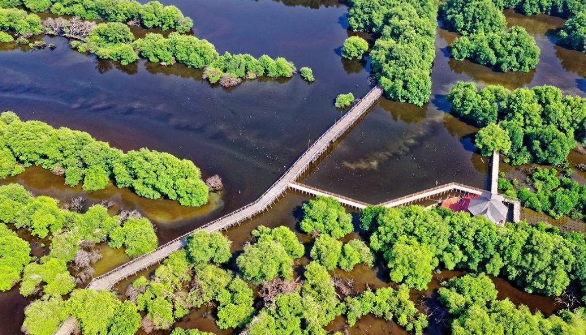 brackish-water-ecotourism-environmental-1454201