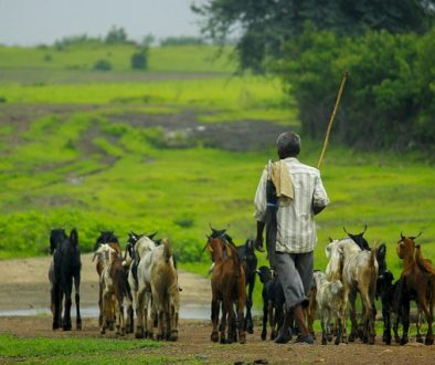 goat-4075099_640