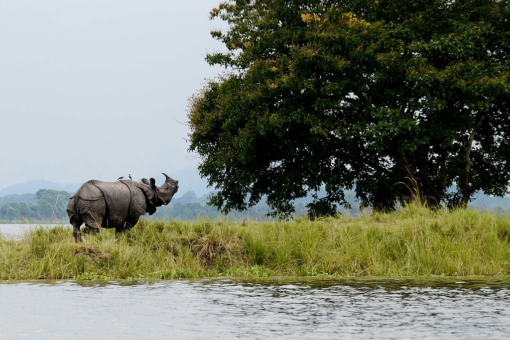 Kaziranga National Park 1