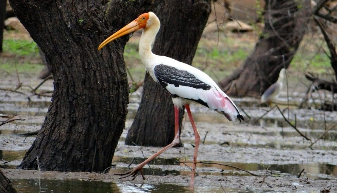painted-stork-851848_1280